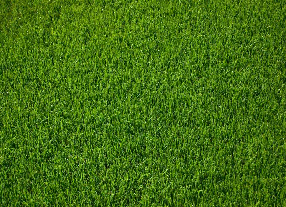 englischer-Rasen